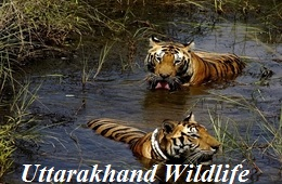 Uttarakhand Wildlife tours