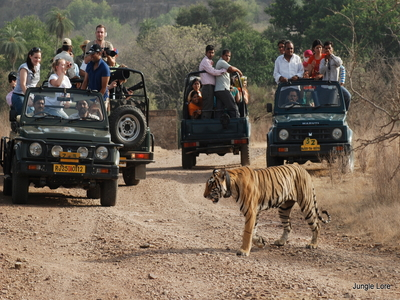 Corbett Jeep Safari with Tiger Safari