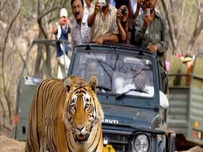 Corbett Tiger Safari with Jeep Safari