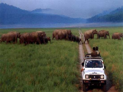 Jim Corbett Elephant Safari Tour